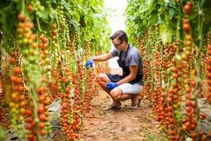 Growing greenhouse vegetables