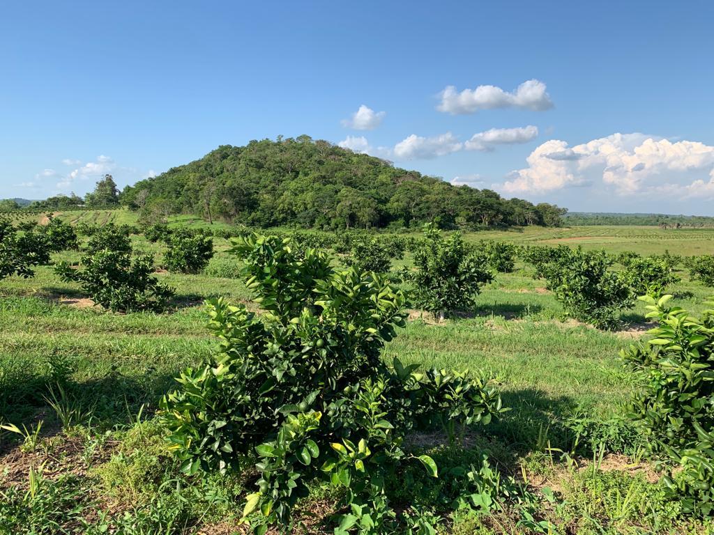 Paraguay Orange Plantation Client Visit Nov 18