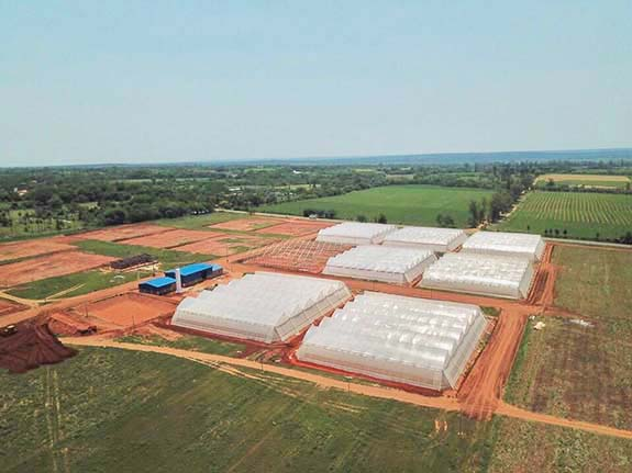Greenhouse structures in construction in our Nueva Italia plantation in Paraguay