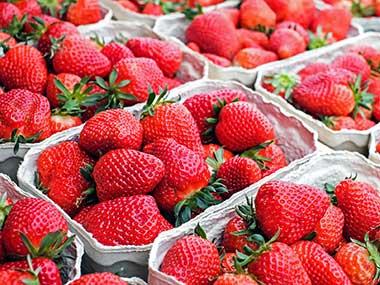 hydroponic greenhouse strawberries