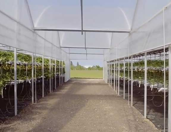 hydroponic strawberry greenhouse structure