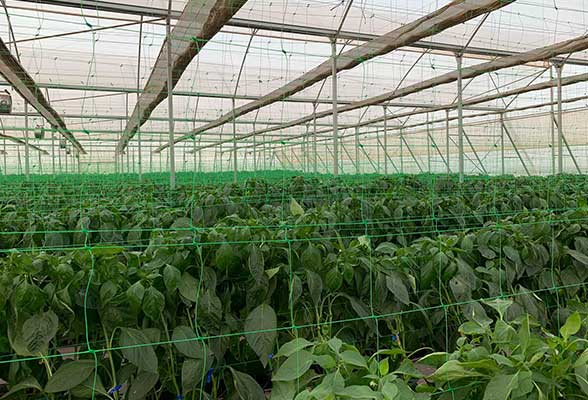 Vegetable greenhouse Paraguay