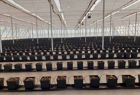 Vegetable greenhouse seedlings
